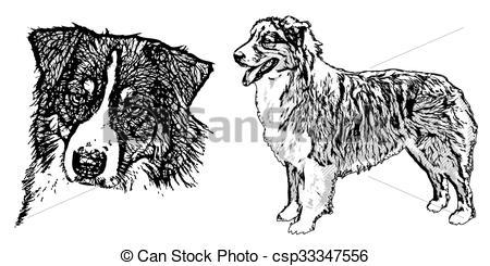 Australian shepherd Illustrations and Clip Art. 41 Australian.