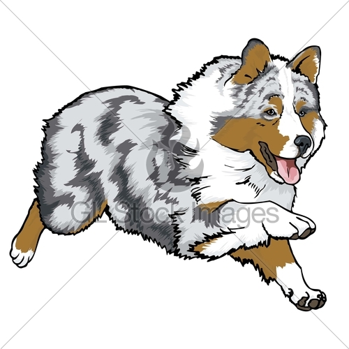 English shepherd clipart.