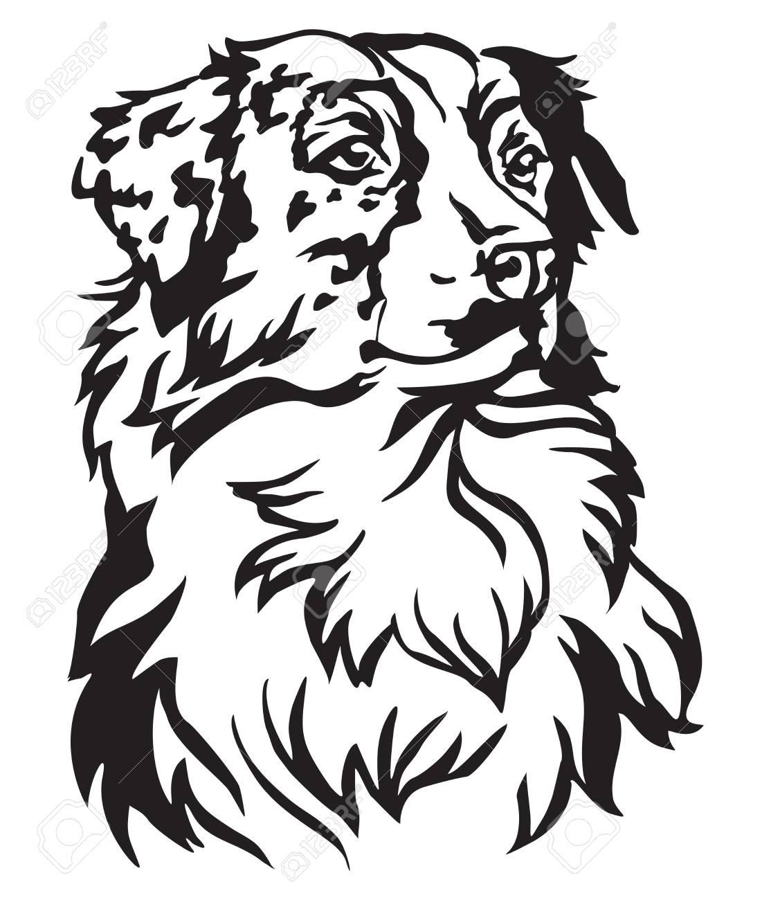 Decorative portrait of dog Australian shepherd, vector isolated...