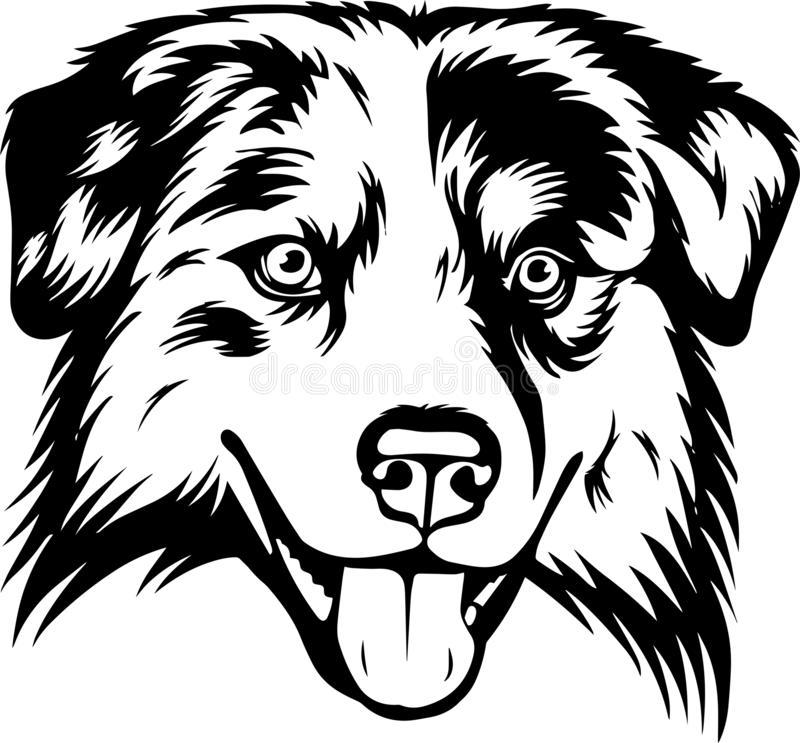 Australian Shepherd Stock Illustrations.