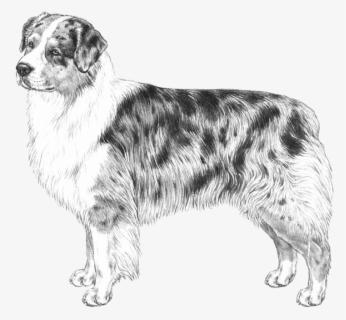 Free Australian Shepherd Clip Art with No Background.