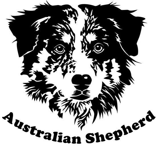 Australian Shepherd vector.