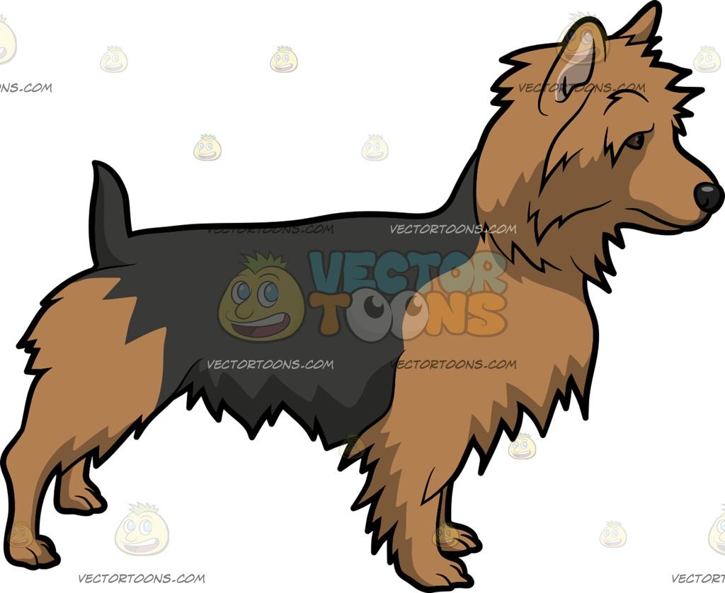 A Curious Australian Terrier Dog Cartoon Clipart.