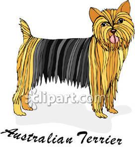 Australian terrier clipart.