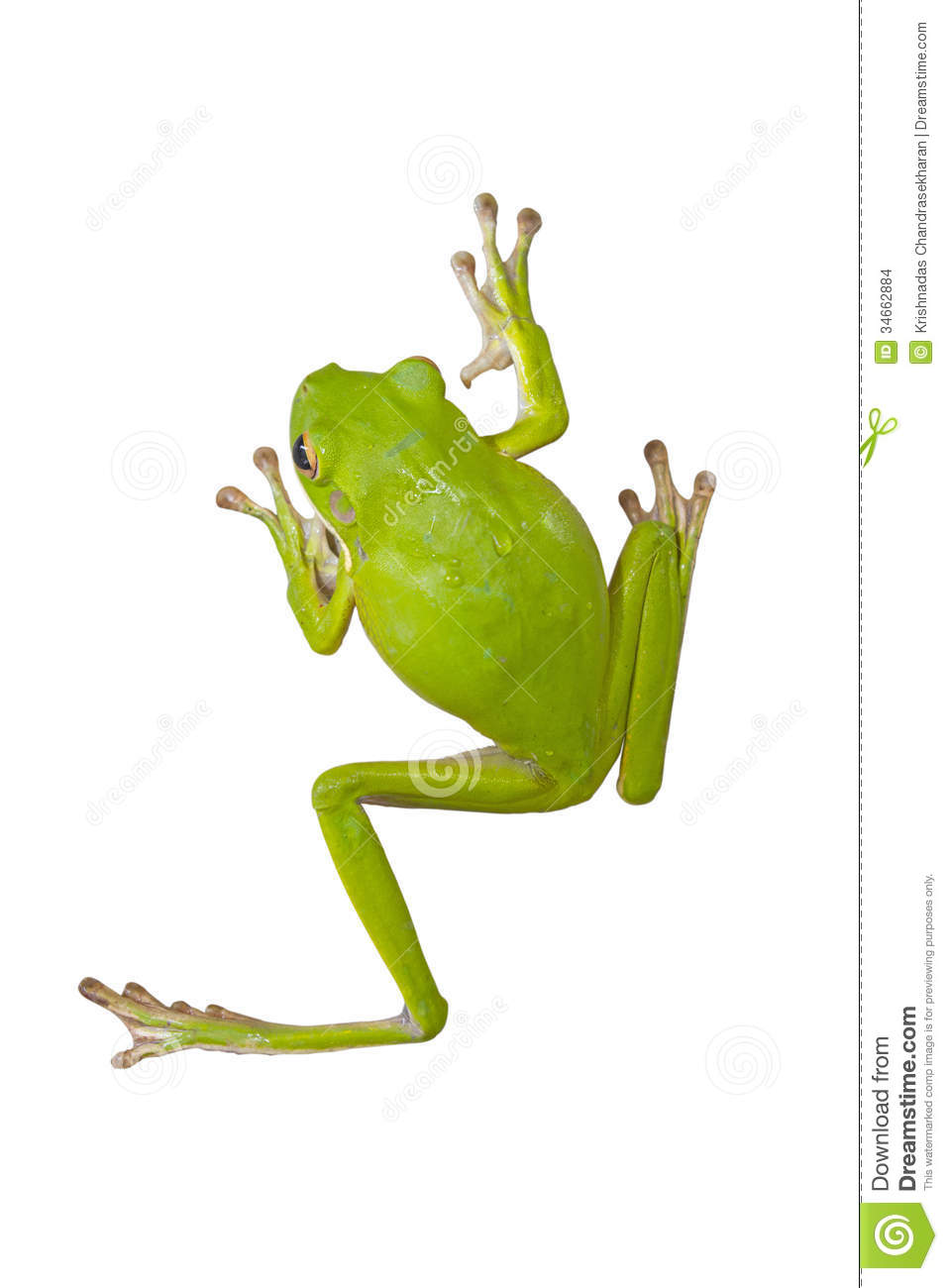 tree frog climbing tree clipart - Clipground