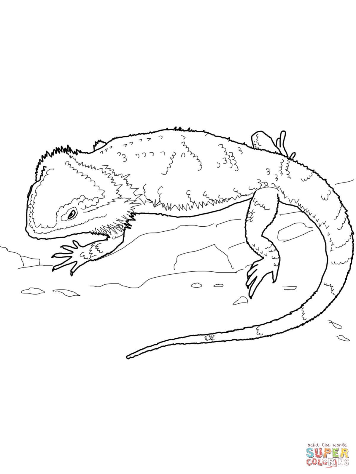 Australian Water Dragon coloring page.