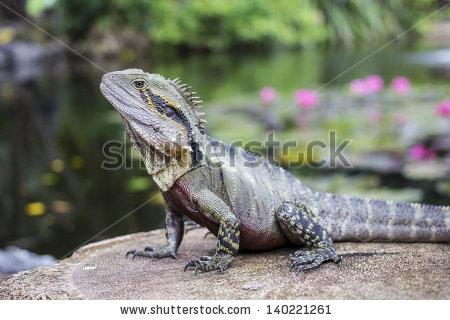 Water Dragon Stock Photos, Royalty.