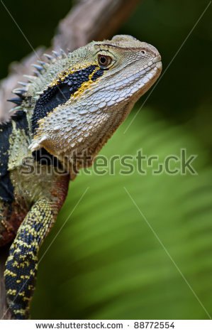 Water Dragon Stock Photos, Royalty.