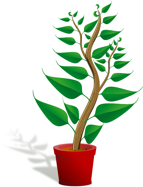 Seedling clipart autotroph, Seedling autotroph Transparent.