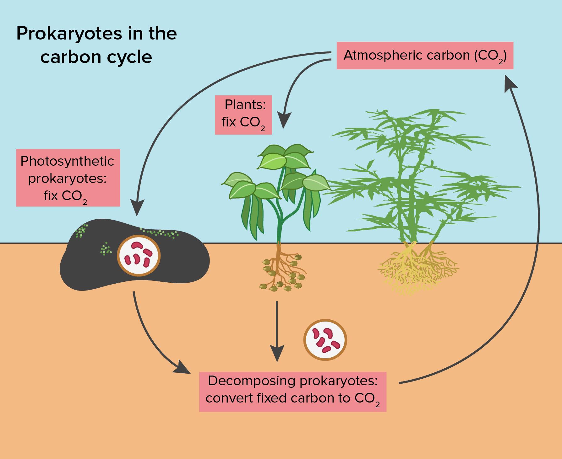 Planting clipart autotroph, Planting autotroph Transparent.