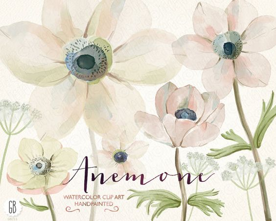 Watercolor flowers, anemones, hand painted, queen anne's lace.