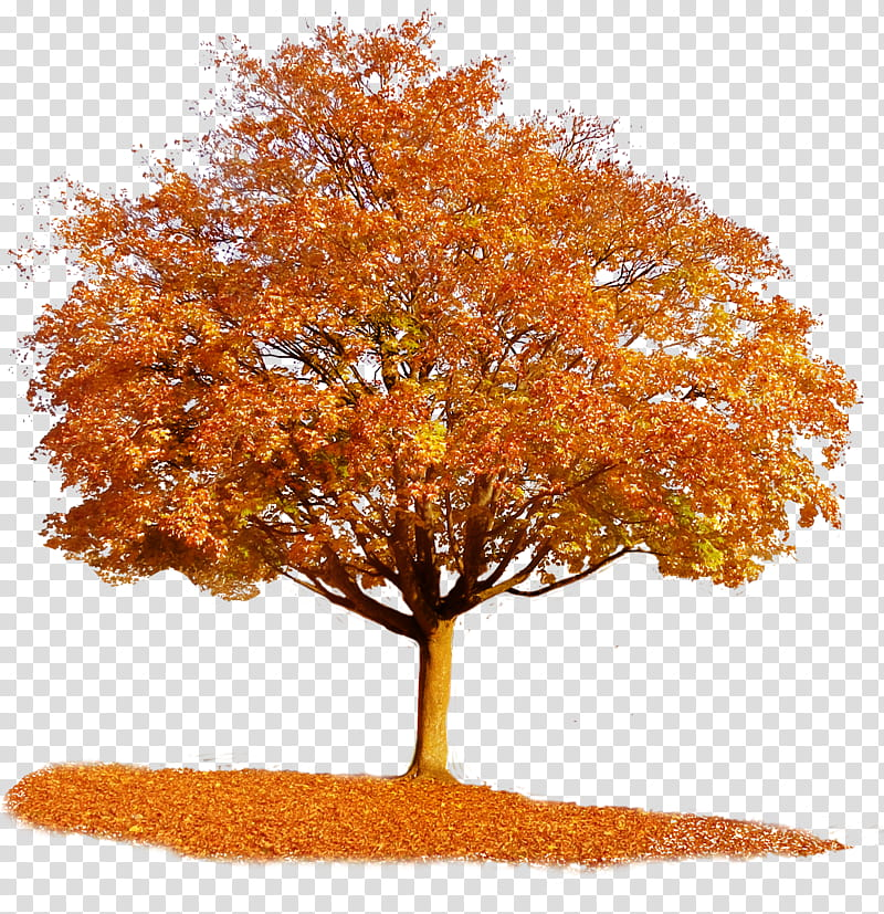 Autumn Tree, brown leafed tree transparent background PNG.