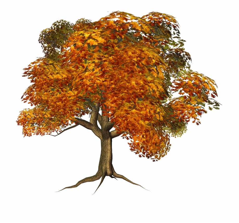 Fall Tree Png.