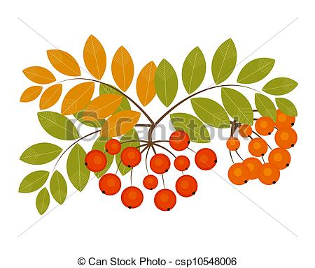 Fall berries clipart.