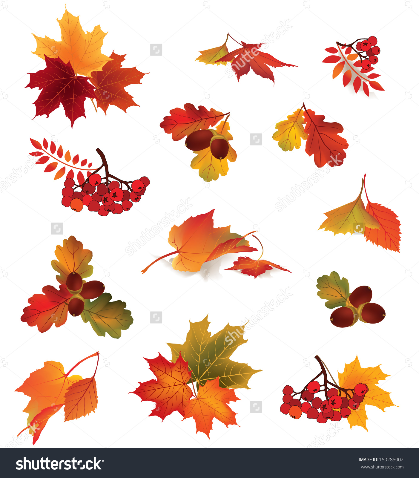 Autumn Icon Set Fall Leaves Berries Stock Vector 150285002.