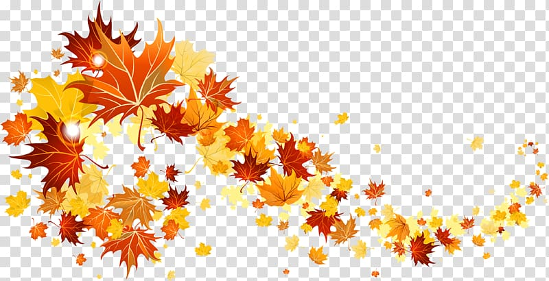 Maple leaves , Autumn leaf color , Falling Leaves.