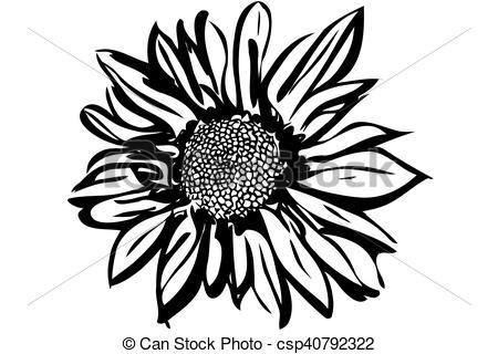 Vector Illustration of beautiful autumn flower chrysanthemum.