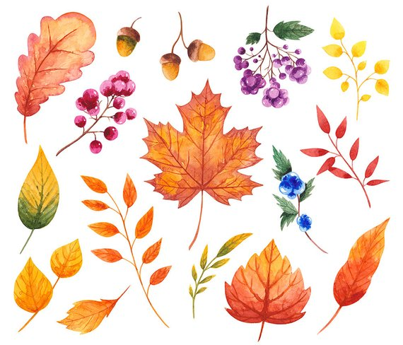 Fall watercolor clipart Autumn clipart Fall clipart Leaves.