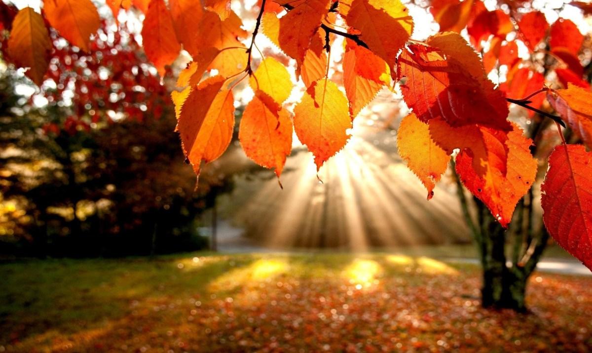 Autumn Clipart Widescreen Clipartfox.