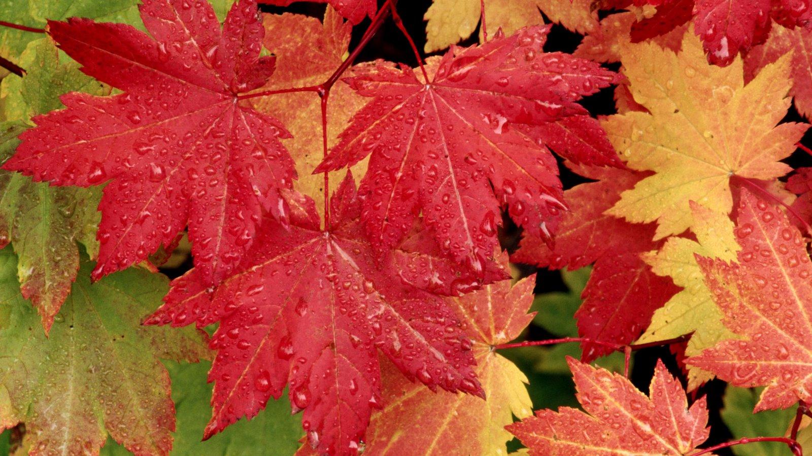Autumn widescreen clipart.