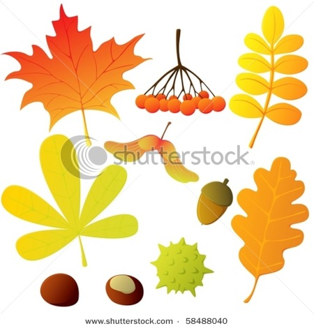 Set of Various Leaves and Seeds In Autumn Colours..