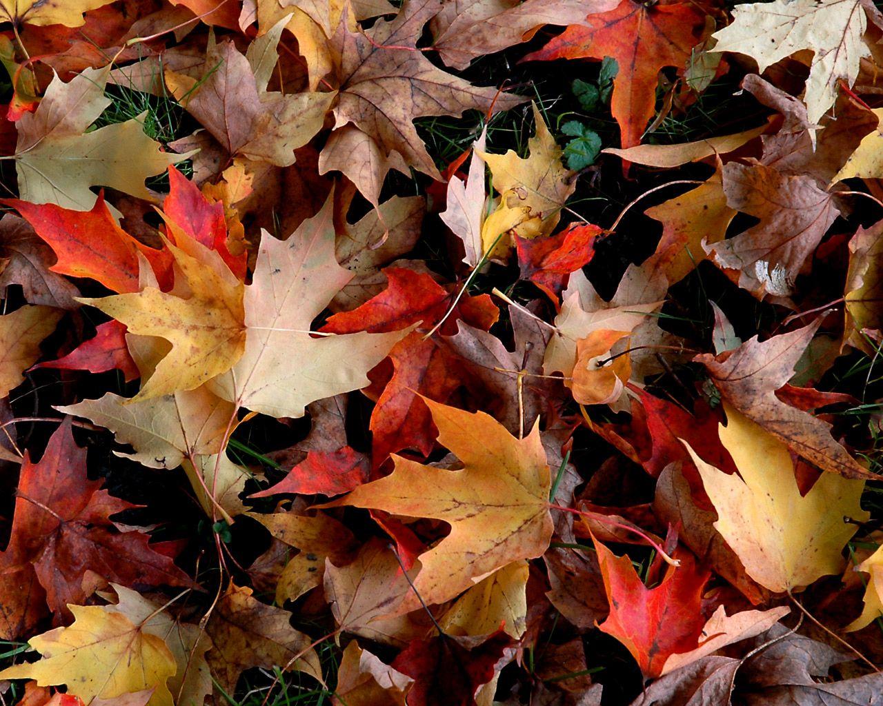 Free Autumn Desktop Wallpaper on WallpaperGet.com.