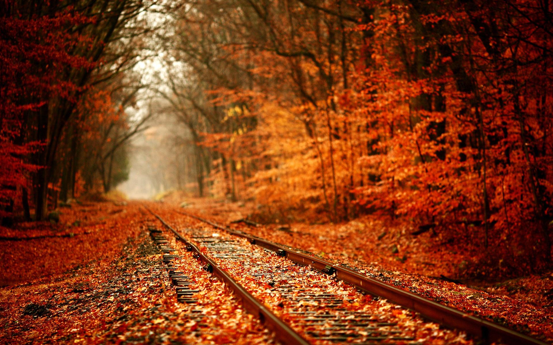 Autumn Backgrounds , Best Background Images , HD Wallpaper.