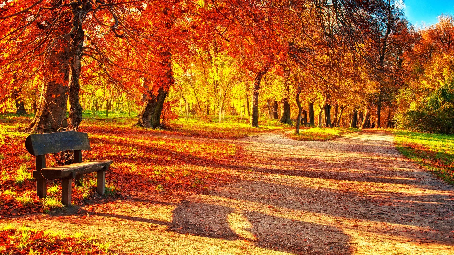 Autumn Leaves Desktop Wallpaper (57+ images).