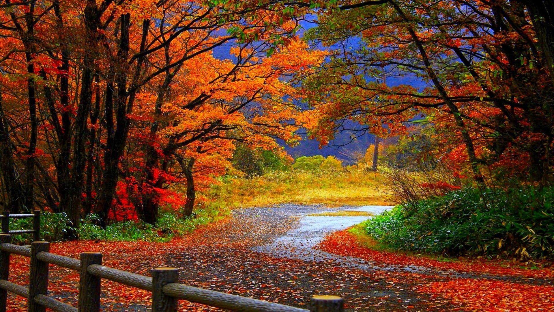 Autumn Scenes Desktop Wallpapers.
