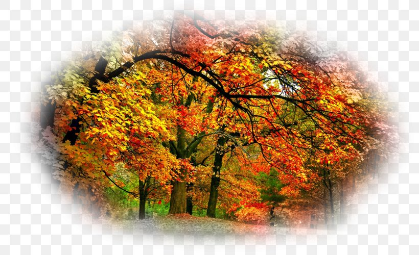 Desktop Wallpaper Autumn Beauty Oak, PNG, 800x500px, Autumn.