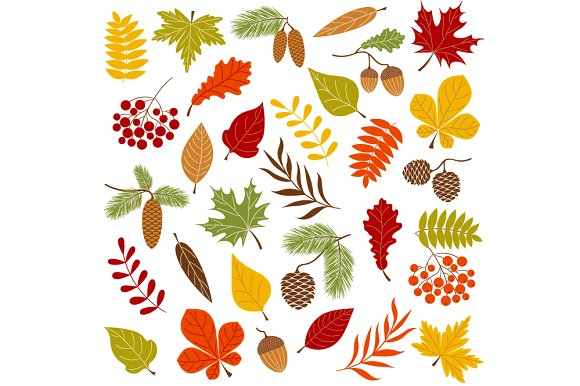 Autumn Forest Clip Art ~ Illustrations on Creative Market.