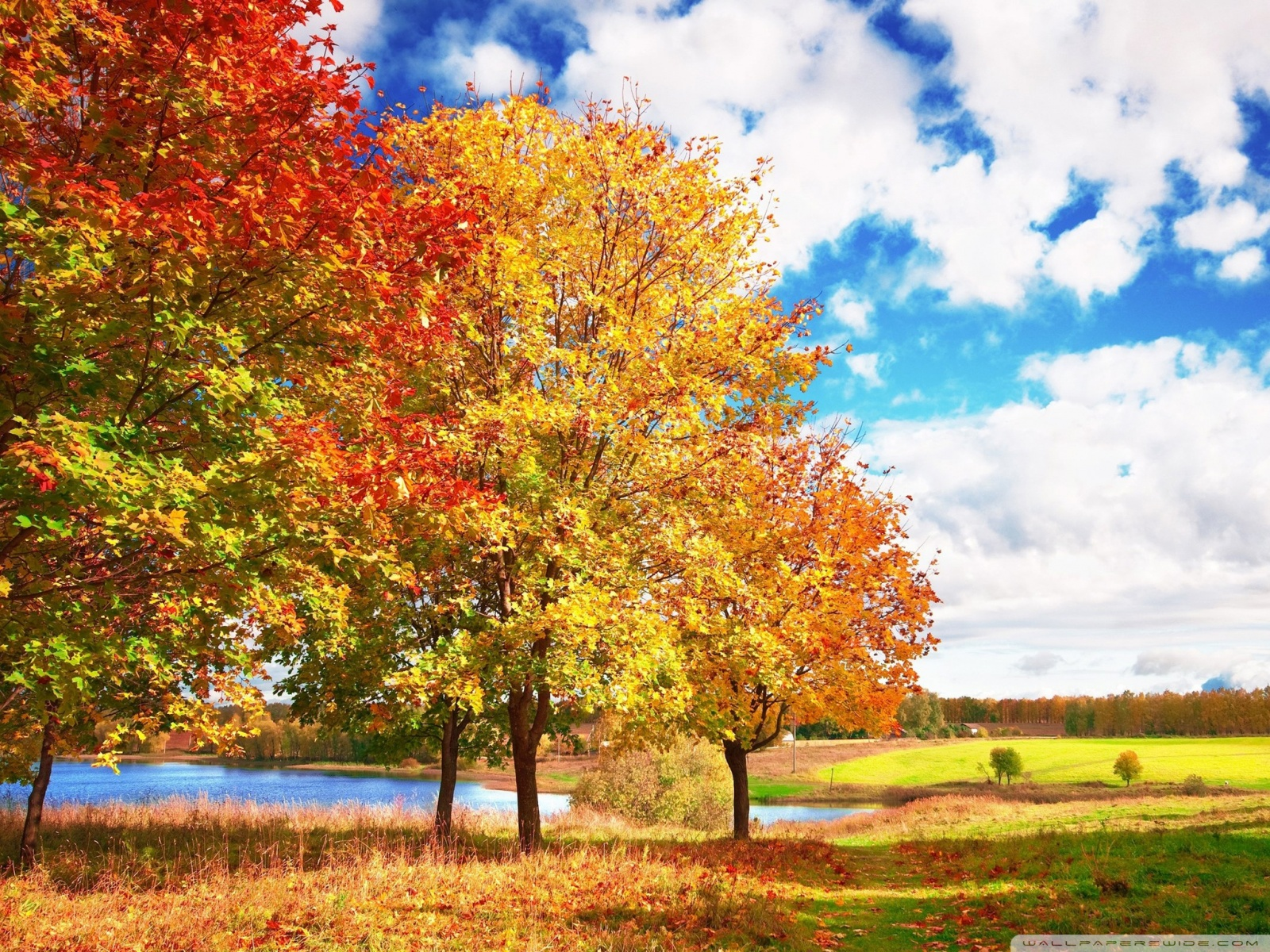 Autumn Trees Clipart.