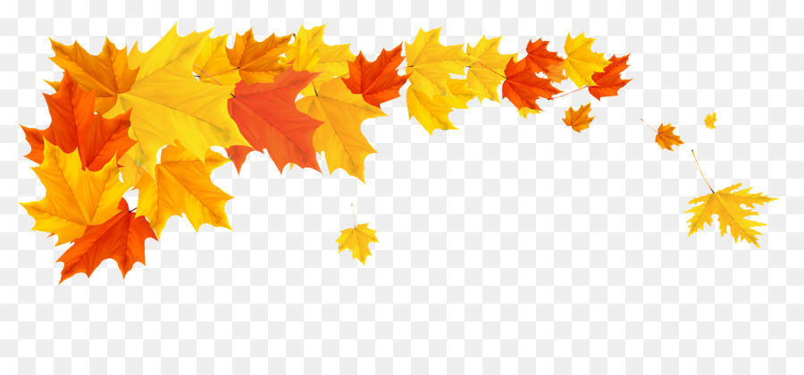 Autumn leaf color Clip art.