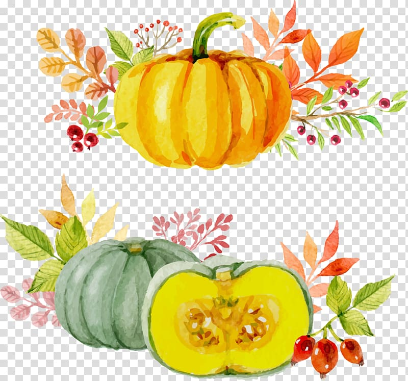 Two illustrations of squash, Paper Thanksgiving Watercolor.