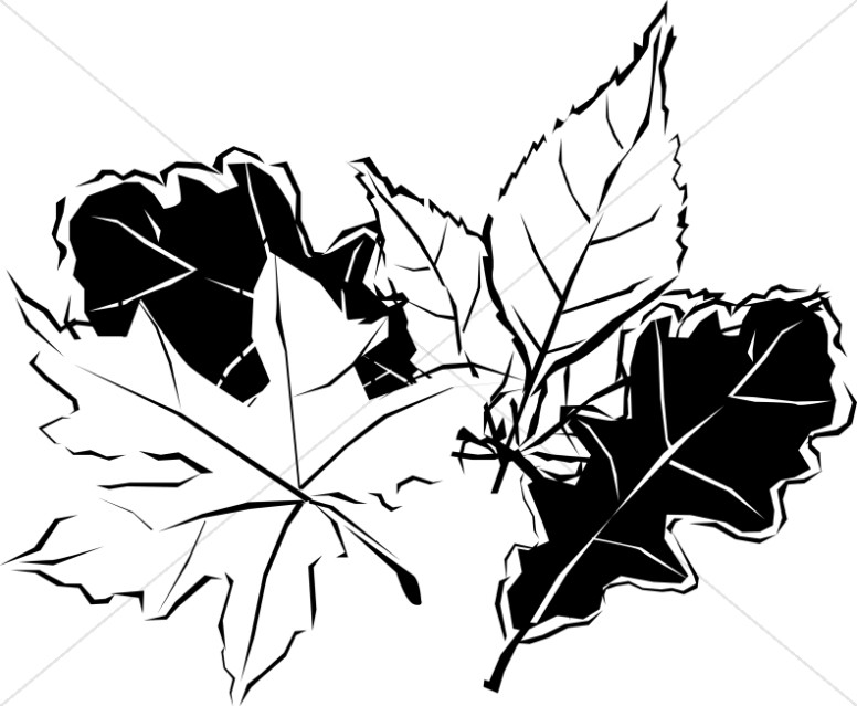 Black and White Autumn Leaves.
