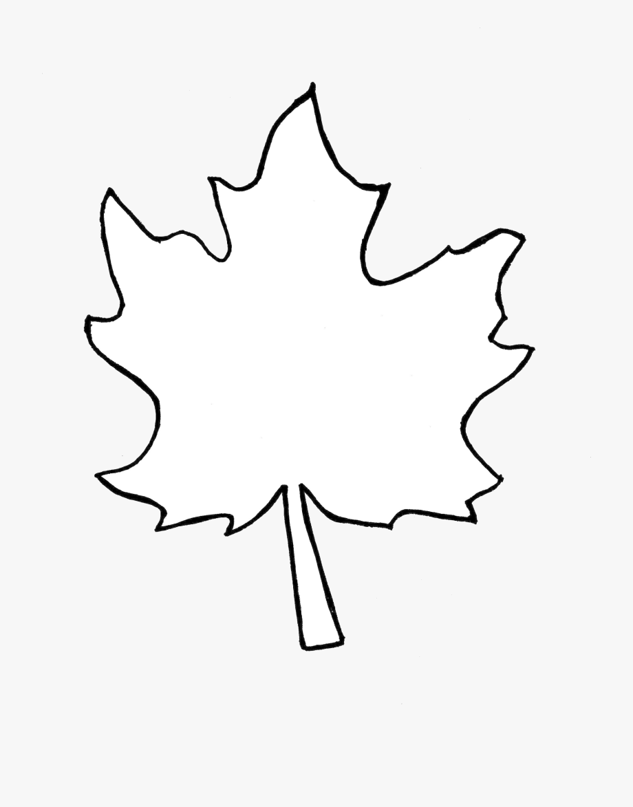 Leaf Outline Collection Fall Leaves Pictures Transparent.