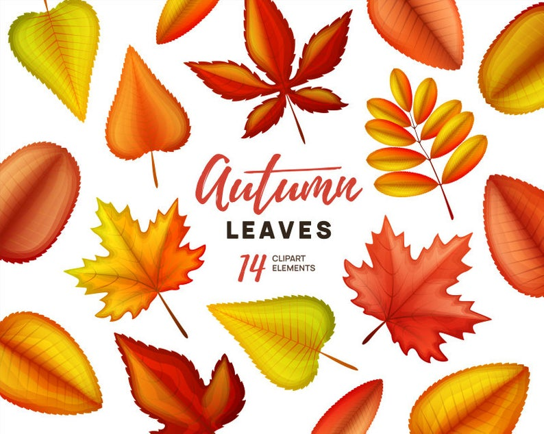Autumn clipart. Autumn leaves clip art. Fall leaves clipart. Vector graphic  collection..