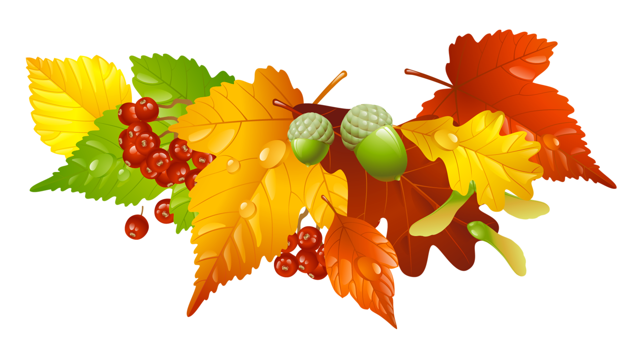 Autumn Leaves and Acorns Decor PNG Picture.