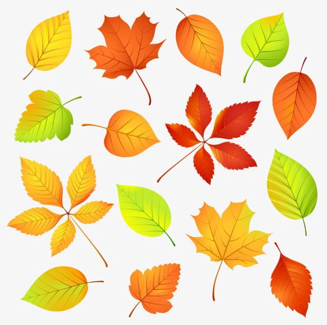 Autumn Leaves PNG, Clipart, Akiba, Autumn Clipart.