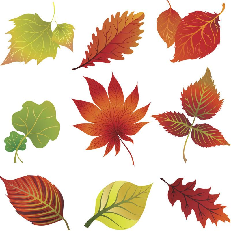 Fall leaves clip art vector.