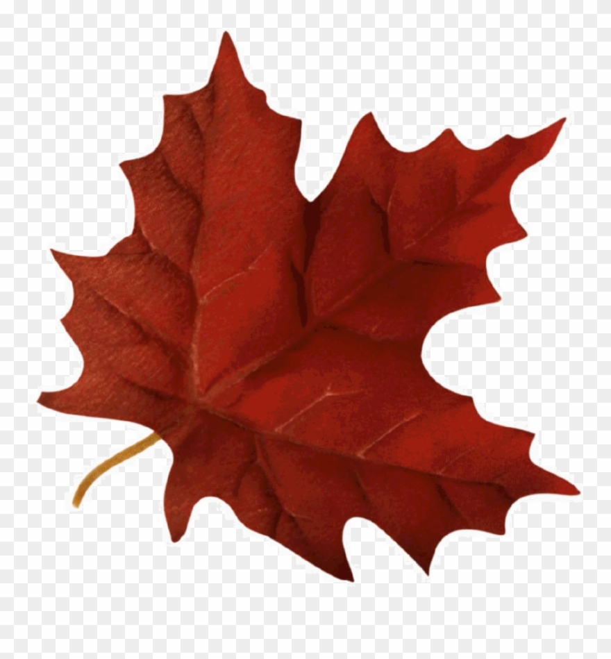 Maple Leaf Clipart Maple Leaf Autumn.