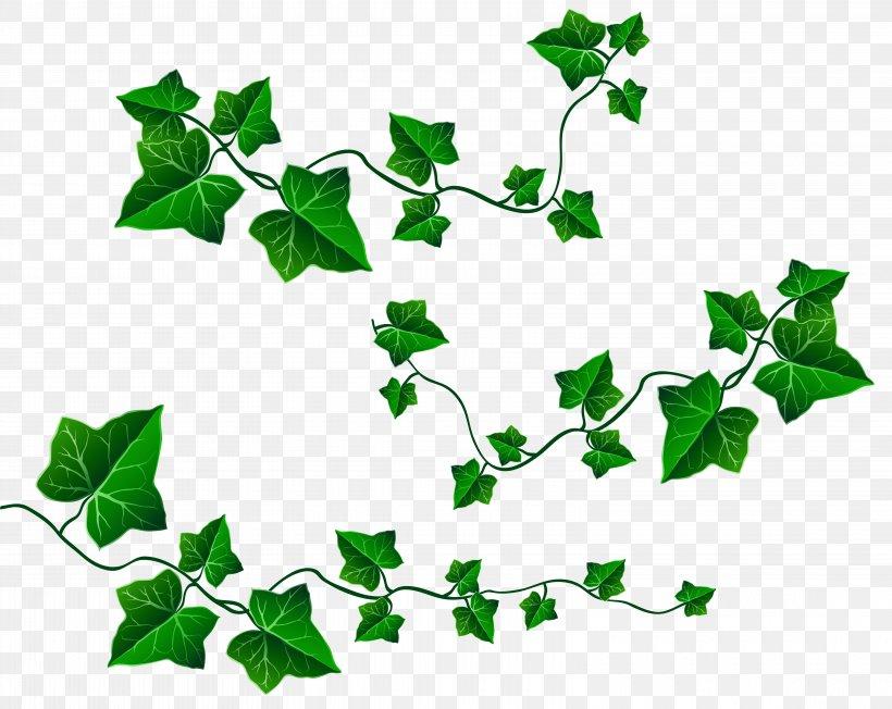 Vine Leaf Ivy Clip Art, PNG, 6240x4964px, Vine, Branch.