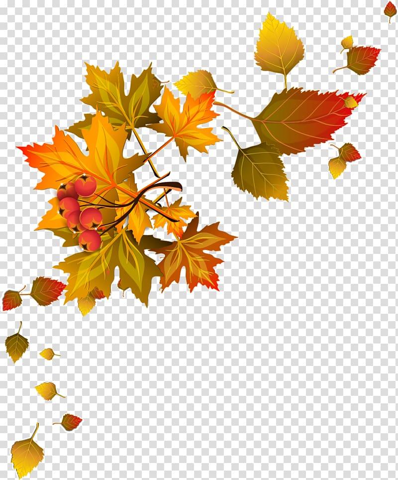 Autumn leaf color Autumn leaf color , autumn transparent.
