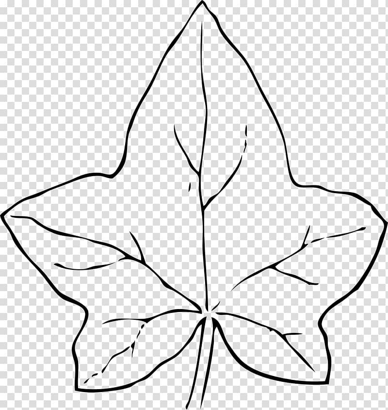 Autumn leaf color Common ivy , Black Leaves transparent.