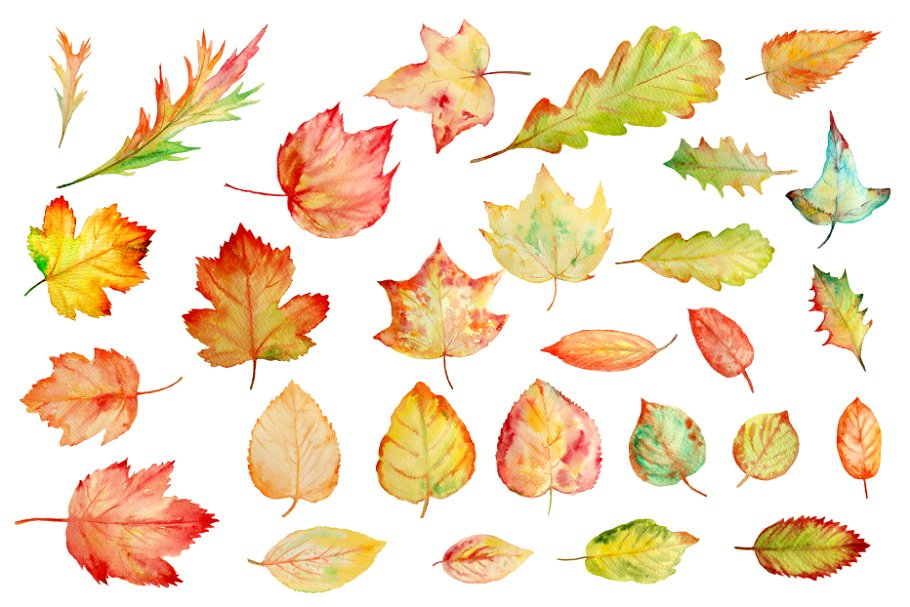 Watercolor Autumn Leaves Clipart ~ Illustrations ~ Creative.
