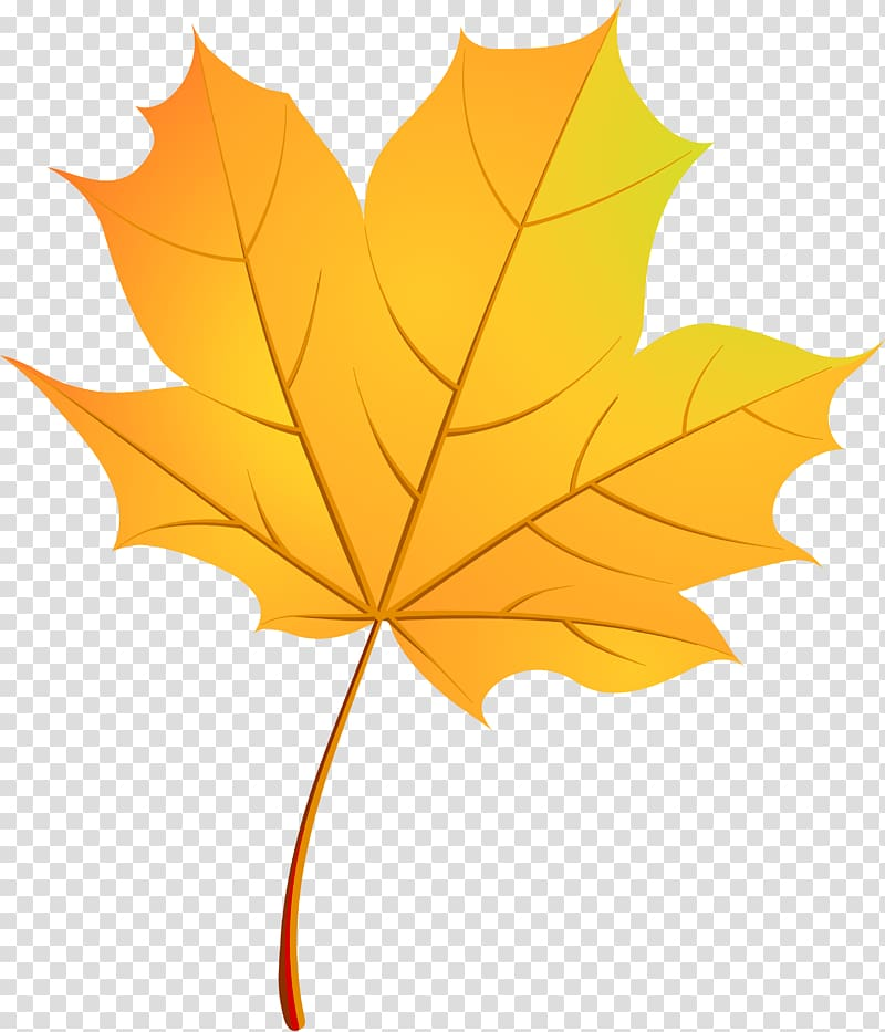 Maple leaf graphic, Autumn Leaves Maple leaf, gold autumn.