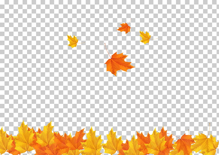 Autumn Leaf , Fall maple leaves background , orange and.