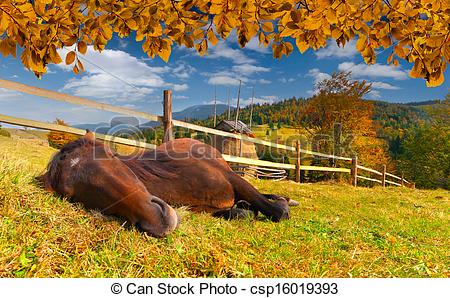Stock Photographs of Sleeping horse in the autumn meadow.