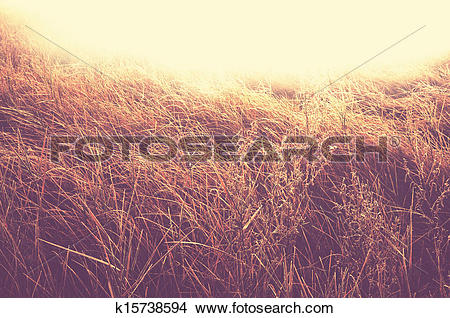 Stock Photo of Autumn meadow k15738594.