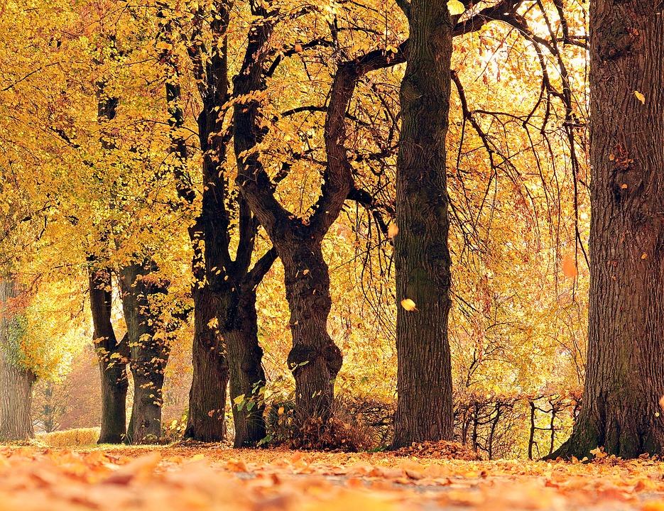 Free photo Mood Avenue Fall Leaves Outdoor Trees Away Autumn.